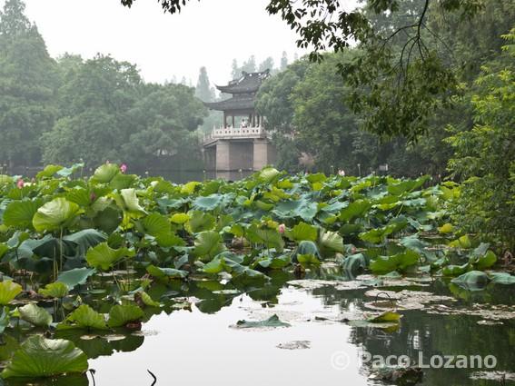 Hangzhou: lago del Oeste