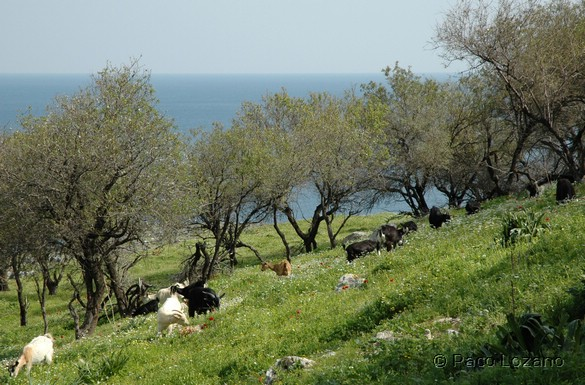 Dónde viajar en abril: Grecia